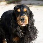 On Flair : Détection canine de punaises de lit